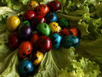 цветни пътпъдъчи малки яйца