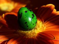 Яйце и Гербер
