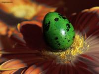 Яйце и цвете