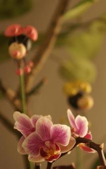 limon flowers