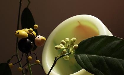 лимон цвят