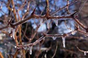 зимни снимки от варна на ледени висулки