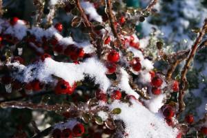 Варна снимки на дървера със сняг снимани за blogmasa.com