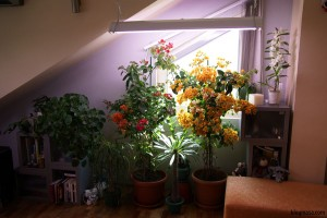 осветление за цветя