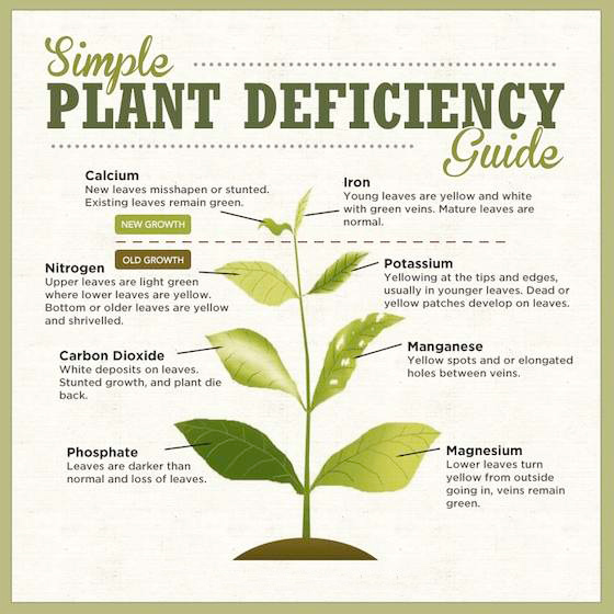 deficiency guide plant